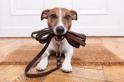 Hundesitter gesucht Rimbach