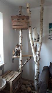 Birken Holz Baumkrone Birkenstämme Naturkratzbaum