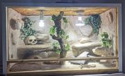 Stachelschwanzwaran mit terrarium