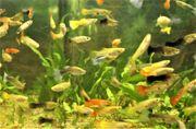 Verschiedene Fische und Pflanze
