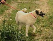 Wendy Goldiges Hundemädchen ca 7
