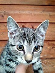 Penelope sucht neues liebevolles Heim