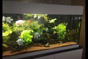 Aquarium 570 Liter mit Unterschrank