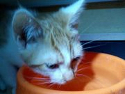 Katzenbaby Babykatze Kitten Kater 20