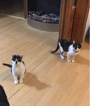 Kitten Katzen