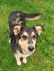Mischlingshund aus Ungarn