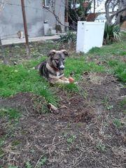 Hundemädchen ENIA