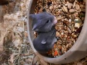 Junge handzahme Cambellhamster in liebevolle