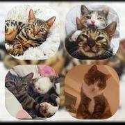 2 wunderschöne Katzen 5 u
