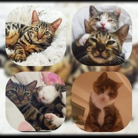 2 wunderschöne Katzen 5 u. 7 Jahre suchen ihr Zuhause mit Freigang!!!