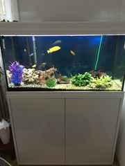 Aquarium Komplettset Aquatlantis 180 Liter