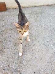 liebe Katze Nana sucht tolles