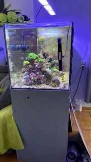 aquarium mit unterschrank und technikbecken