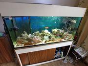 400l Meerwasseraquarium komplett mit Besatz