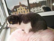 Süße MIX Katze Kätzchen Kitte