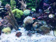 Hamburg Meerwasser Aquarium WhatsApp Gruppe