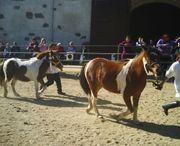 Freizeitreiten Ponyreiten Ausritte