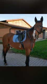 Pferd sucht Pfleger Reiter