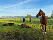 Freier Pferde Einstellplatz in Offenstall