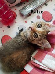 Katze Amelie sucht liebevolles Zuhause