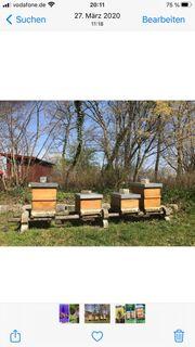 Bienenvölker auf Zanderwaben