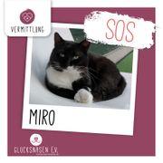 Kater Miro sucht ganz dringend