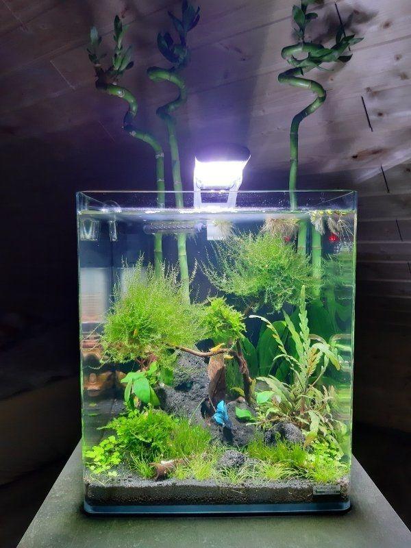 Dennerle 30 L Nano Cube Aquarium Aquascape Garnelen Kampffisch