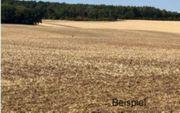 Grundstück Ackerfläche Nähe Wittenberg
