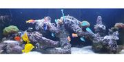 Salzwasser Aquarium
