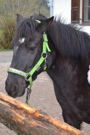 sportliches Pony