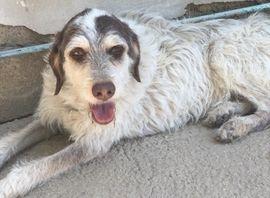 Unkomplizierte Abby: Kleinanzeigen aus Landshut - Rubrik Hunde