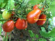 Tomatensamen frisches Tomaten - Saatgut 2019