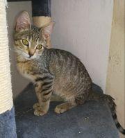 Katze Shelly 4 Monate geimpft