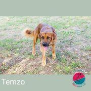 Temzo - unsere vielseitige Sportskanone