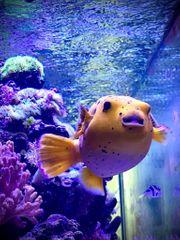 SUCHE Meerwasserfische Korallen Bewohner jeglicher