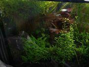 viele verschiedene Wasserpflanzen