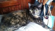 Süßes Kätzchen Lori möchte Dein