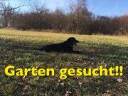 Suche Gartengrundstück Wiese Waldstück Schrebergarten