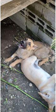 THALI - kleines Hundemädchen sucht ihr