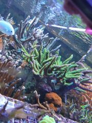 Auflösung Aquarium salzwasser meerwasser gesamter