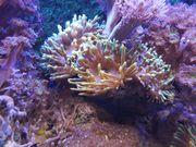 Verschiedene Korallen ab 5 Euro
