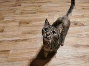 Katzendame 9 jahre alt