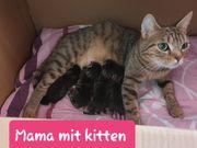 Süße katzenbabys suchen bald ein