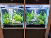 Zwei Nano Cubes Süßwasser Aquarien