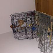 Kanarienvögel in gelb