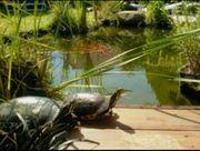 ich kann noch Wasserschildkröten aufnehmen