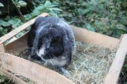 Kaninchen Flöckchen geb August 2018