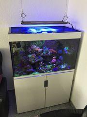 Meerwasser Aquarium Eheim Inspiria 300