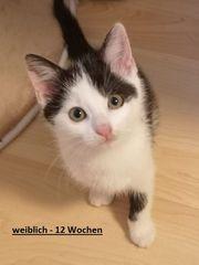 Katzen - Jungkatze - Katzenkinder v Katzenfreunde