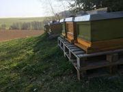 Starke Carnica Bienenvölker Bienen Ableger